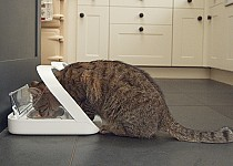 cat-eating-surefeed-mircochip-feeder