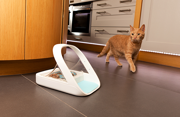 Cat approaches Microchip Pet Feeder