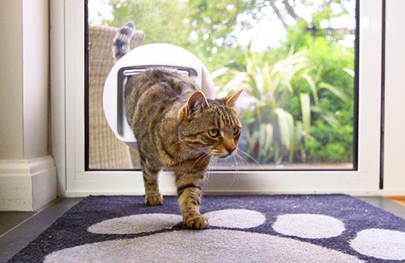 Cat walking through cat flap in glass