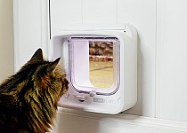 Cat looking through Microchip Cat Flap Connect