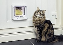 Cat next to Microchip Cat Flap Connect