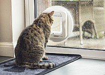 cat-looking-out-of-sureflap-mircrochip-catflap