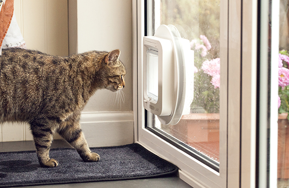 The SureFlap Microchip Cat Flap - Keep Unwanted Cats Out!