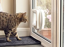 cat-looking-out-sureflap-mircochip-catflap