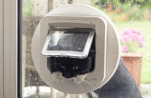 cat-through-sureflap-microchip-catfalp