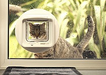 cat-looking-in-sureflap-mircochip-dualscan