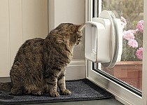 cat-looking-out-sureflap-dualscan