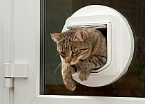 cat-through-glass-cat-flap2