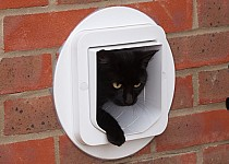 cat-through-wall-cat-flap