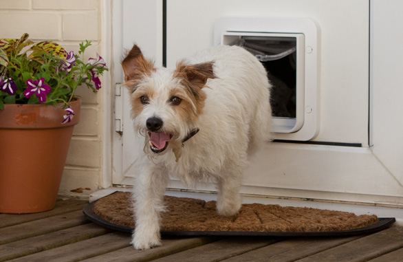 dog-through-pet-door