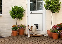 Dog through Microchip Pet Door Connect 2