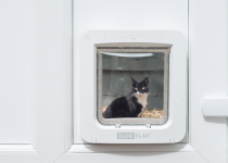 Cat looking through Microchip Pet Door Connect