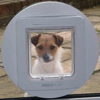 """The SureFlap pet door has substantially improved my life. I was aware of having to let the dog..."