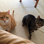 "Nicki purchased a DualScan cat flap for her two cats: ""Truman is the orange fellow, Crunch is..."