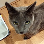 """My Russian Blue is diabetic and likes to eat little bits at a time. The other cats were always..."