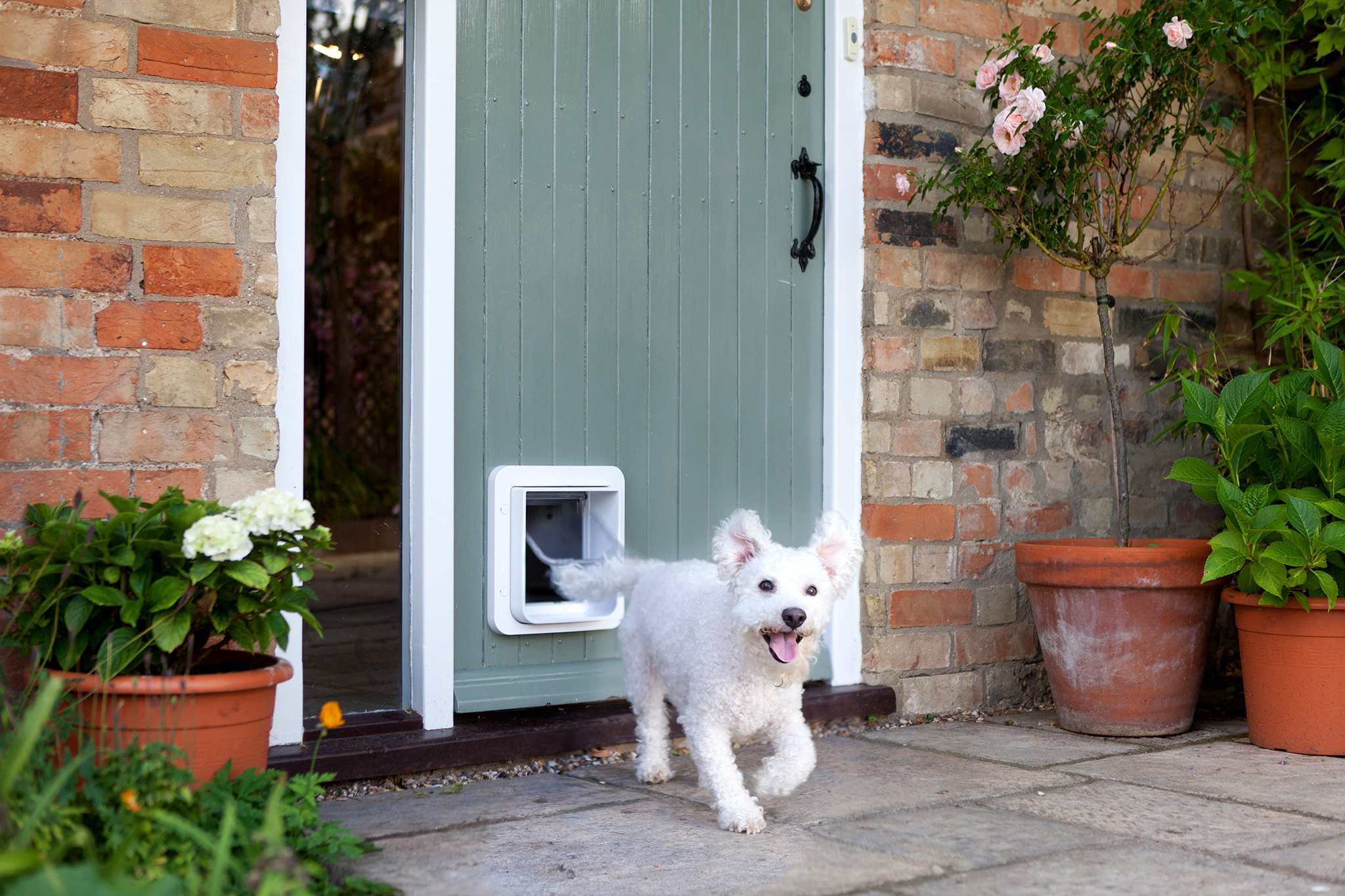 The Sureflap Microchip Pet Door For Large Cats Small Dogs