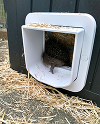 Hedgehog using Microchip Cat Flap